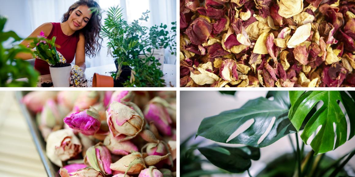 plantes vertes et pot-pourri