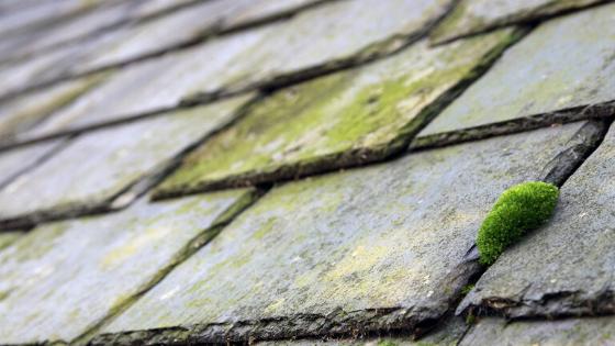 Les différents types de mousse sur votre toiture