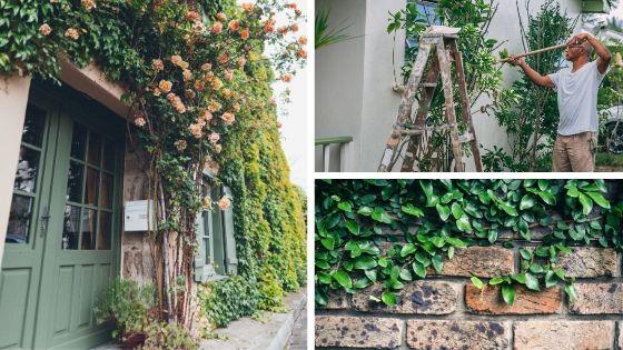 végétaux façade