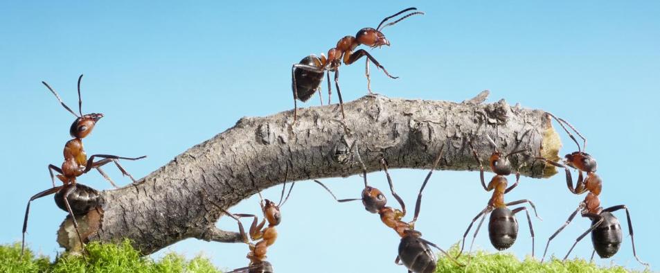 trucs et astuces pour se débarrasser des fourmis avec des produits naturels