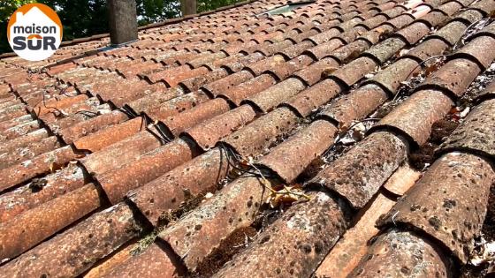 Nettoyage et démoussage de toiture