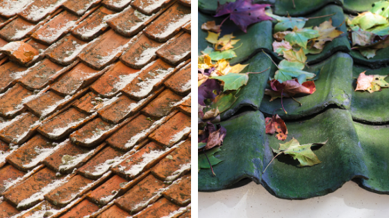Pourquoi le démoussage de toiture est-il indispensable