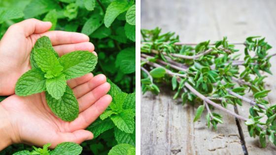 Les plantes anti-guêpes et frelons