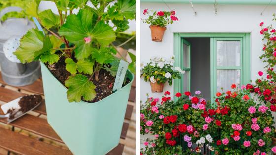 fleurs et végétaux façade maison